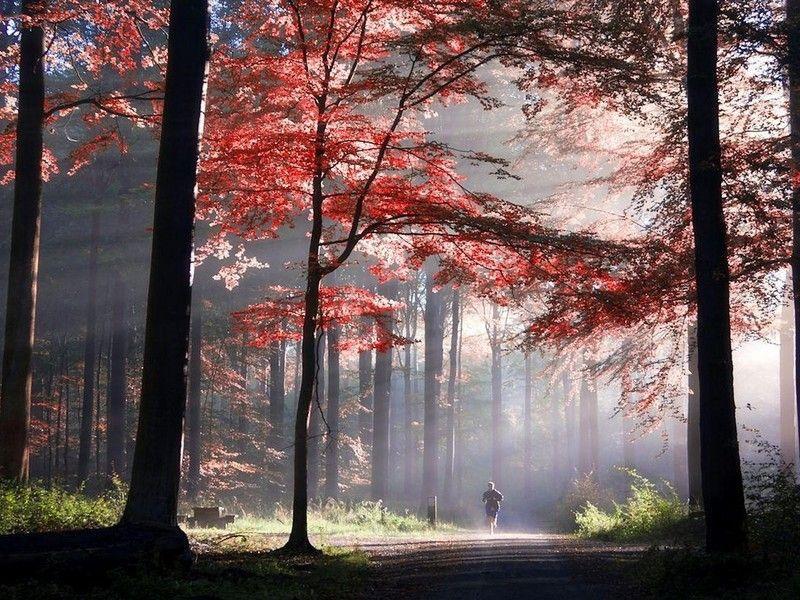 correr en bosque